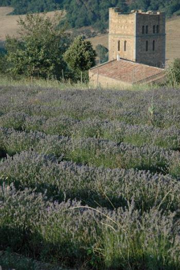 La fioritura della lavanda all'Abbazia di San Giusto - Tuscania