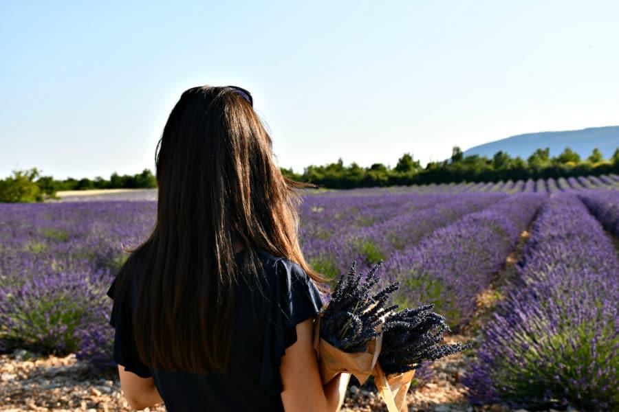 Lavanda_Sault_fioritura_Provenza
