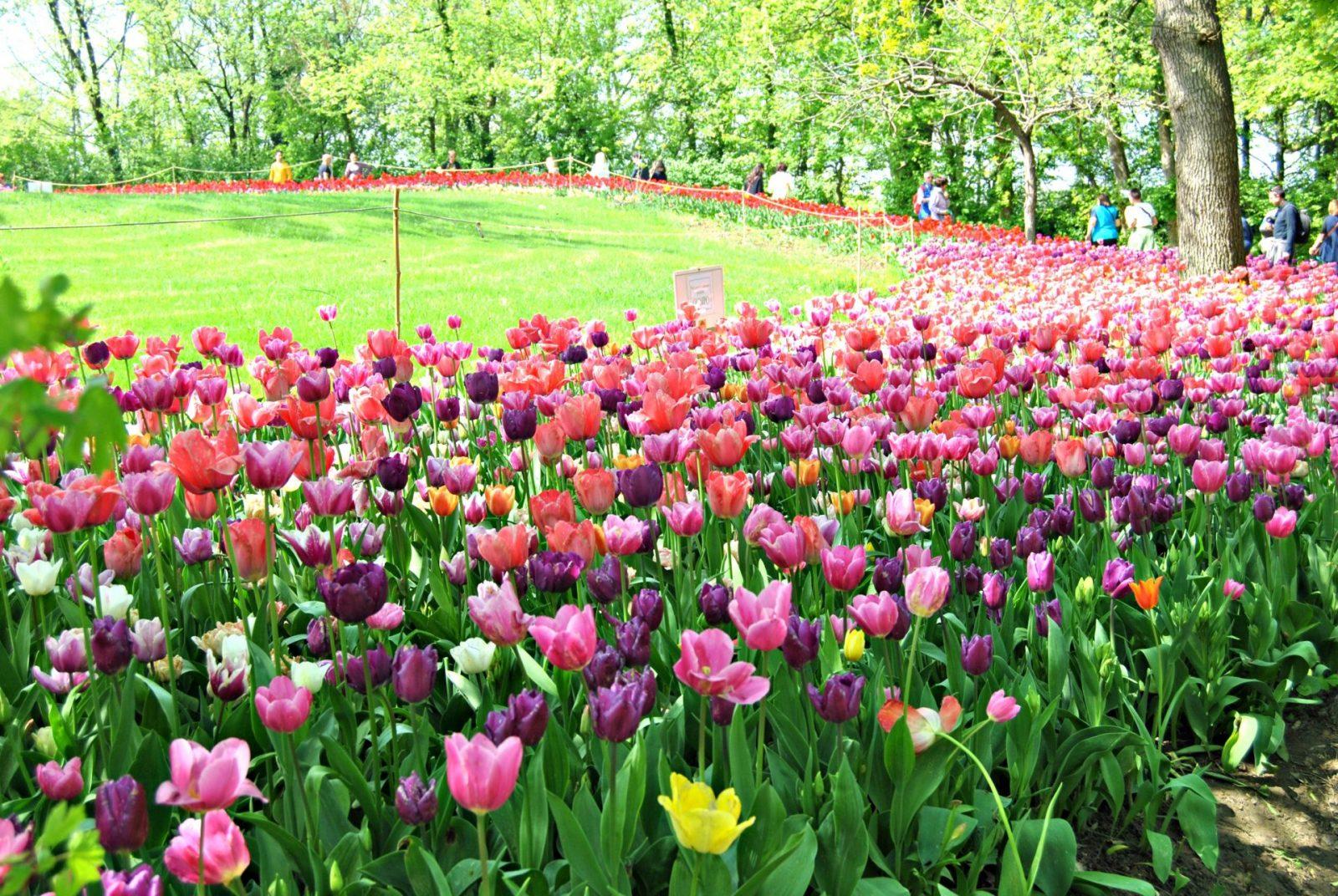 Castello di Pralormo - Messer Tulipano