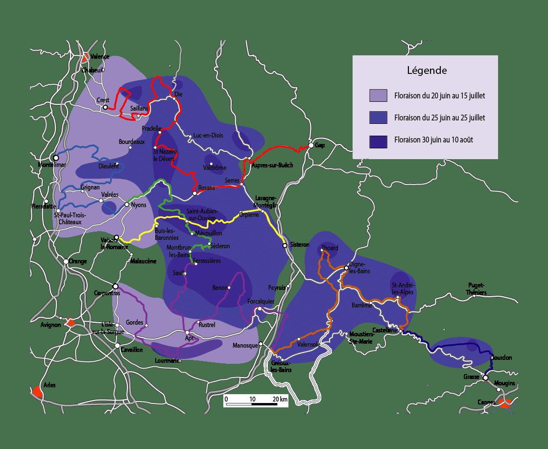 Mappa fioritura lavanda_provenza
