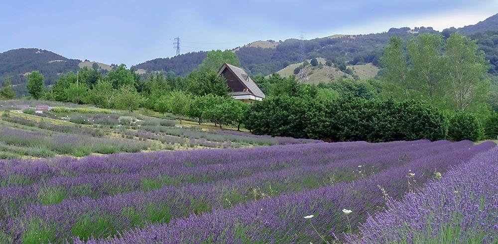 Parco della Lavanda a Campotenese