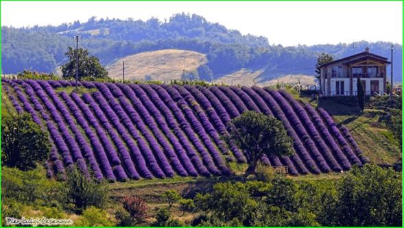 Itinerari insoliti per ammirare la fioritura della lavanda in Italia