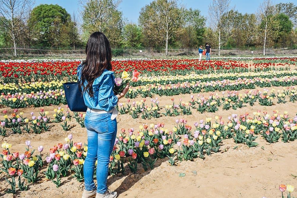 Tulipani italiani 2021: tutte le informazioni per la visita