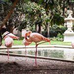 I fenicotteri di Villa Invernizzi a Milano